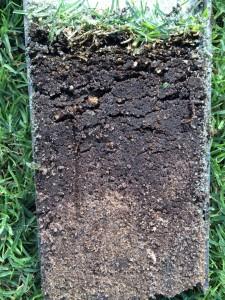 Soil profile - divot recovery